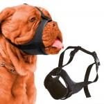 Φίμωτρα Σκύλων